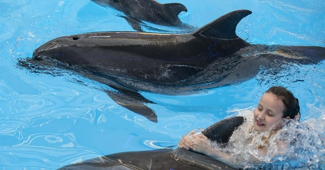 Dolphin named 'Peace' born in ailing Ukraine city