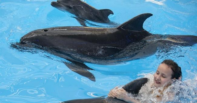 Dolphin named 'Peace' born in ailing Ukraine city
