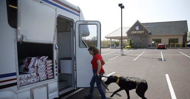 Dog's best friend? Other dogs that give blood