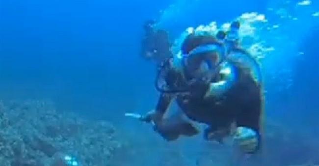 Hawaii scuba divers face off over aquarium fish
