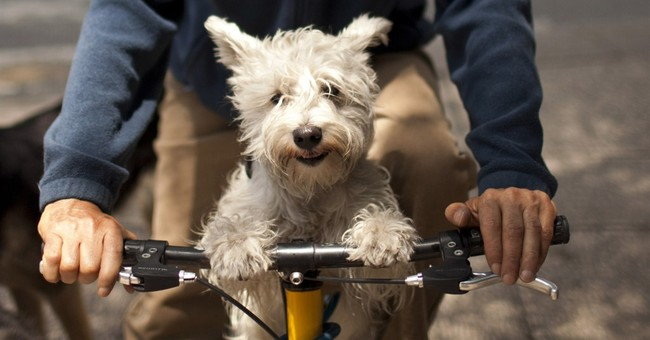 Mexico City vets, pet owners object to animal law