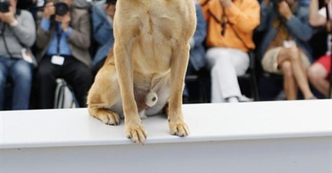 "Nouvelle Wag: ""White God"" wins Cannes' Palm Dog"