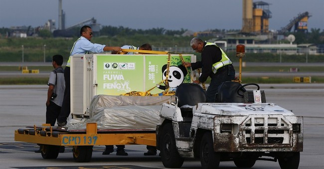 2 pandas arrive in Malaysia from China after delay