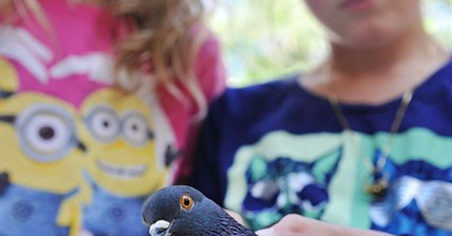 Missing pet pigeon flies to school of young owner