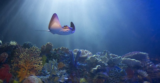 Magnate Carlos Slim opens aquarium in Mexico
