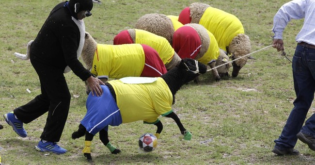 Soccer-playing sheep in Colombia honor World Cup