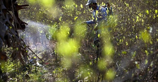 Peru postpones coca crop destruction