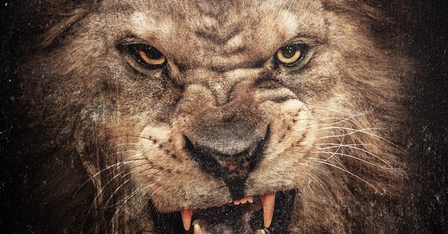 Review: 50 Cent shows rust on 'Animal Ambition'