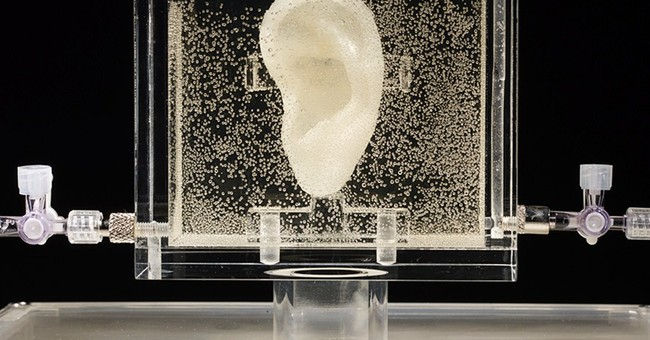 German museum shows live replica of van Gogh's ear