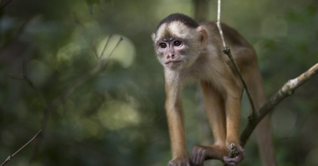 Brazil Cup visitors: exotic Amazon animals abound