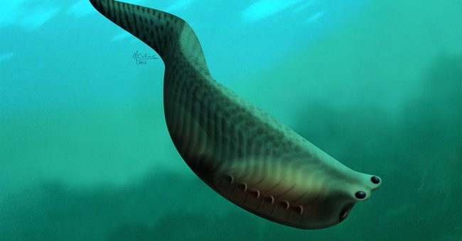 Fossils reveal details of jawless ancient fish