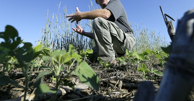 Food companies work with farmers on sustainability