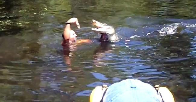 La. tour operators ordered to stop feeding gators