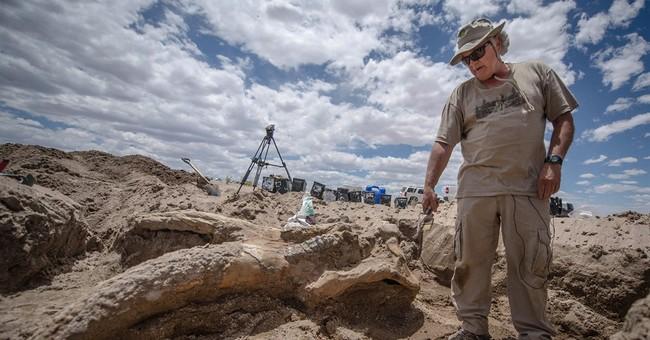 Prehistoric elephant skull excavated in New Mexico