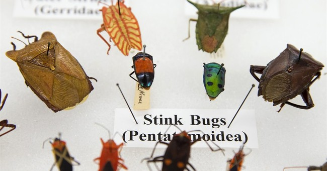 Smithsonian asks judge's help with bug collection