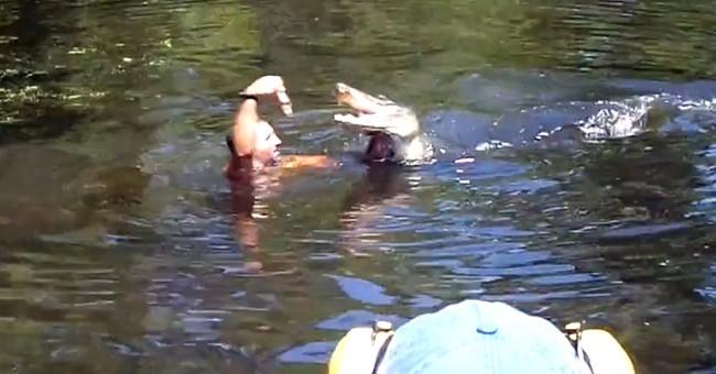 Tourist video captured gator-feeding frolic