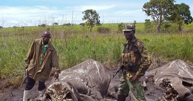 Poachers massacre 68 elephants in Congo park