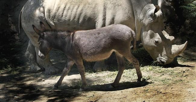 Hee-haw! At zoo, donkey pals calm restless rhino
