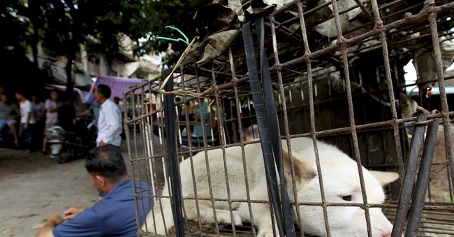 China dog-eaters dodge activists with early feast