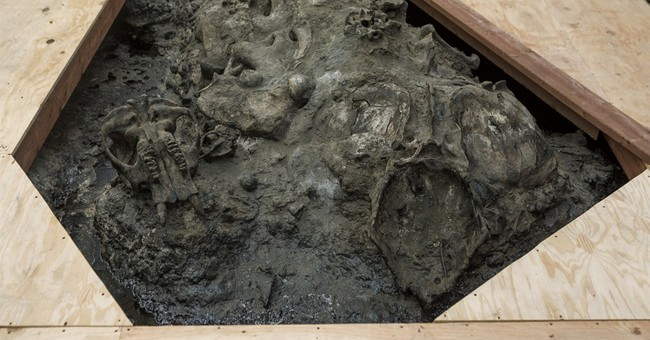 Scientists resume digging at La Brea Tar Pits