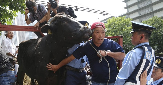 Fukushima farmers appeal to Tokyo with live bull