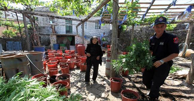 Albania: tons of drugs seized from lawless village