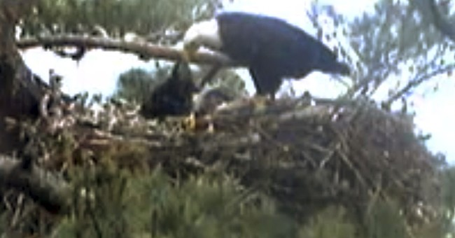 Webcams offer viewers unflinching look at nature