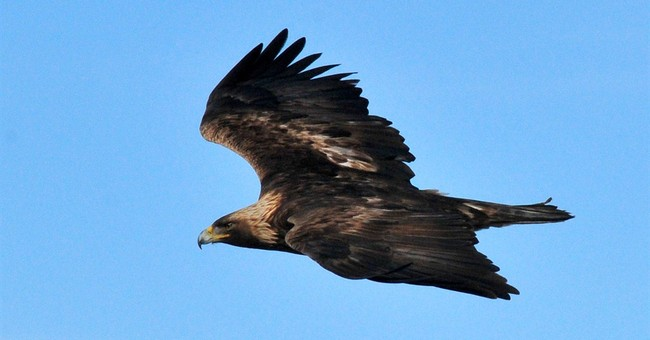 Feds nix eagle penalties for California wind farm
