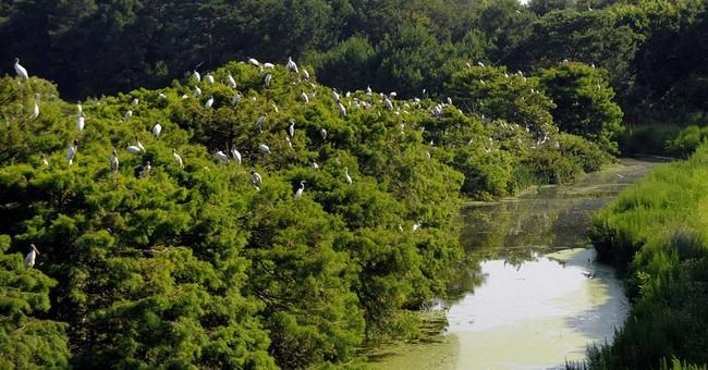 US declares wood storks no longer endangered