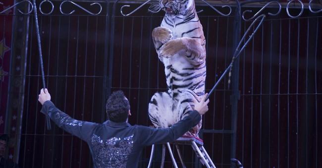 AP PHOTOS: Mexico City circus acts fear animal ban