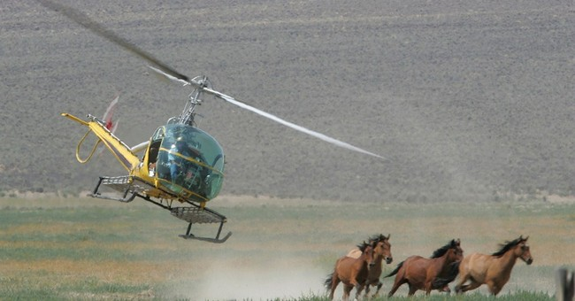 Federal protection sought for wild horses in West