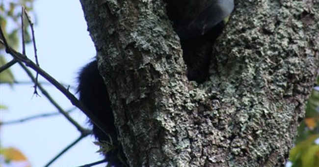 Bear rescued after head gets stuck in cookie jar