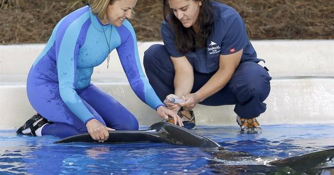 Some SeaWorld mammals survive longer in captivity