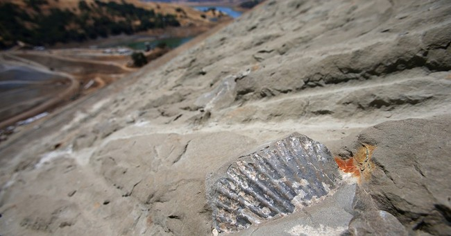Dam construction turns up fossil treasure trove