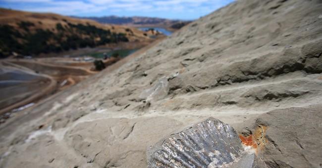 Dam construction turns up fossil treasure trove