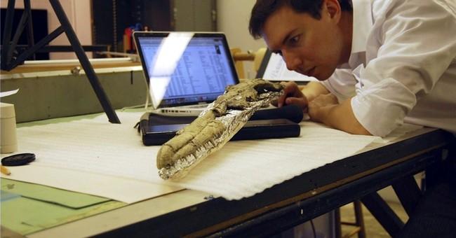 Study: Fossil soaring bird had huge wingspan