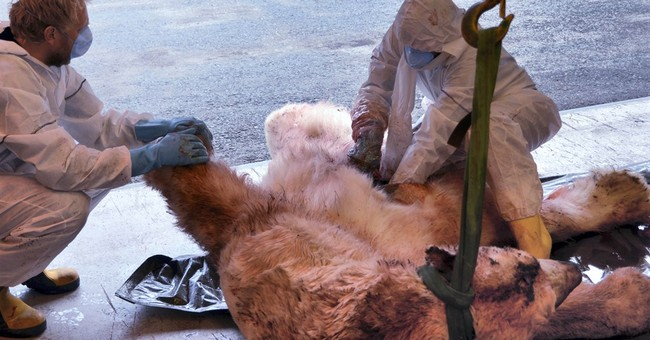 UK trip leader: I tried to gouge polar bear's eyes