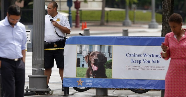 Secret Service starts K-9 patrols near White House