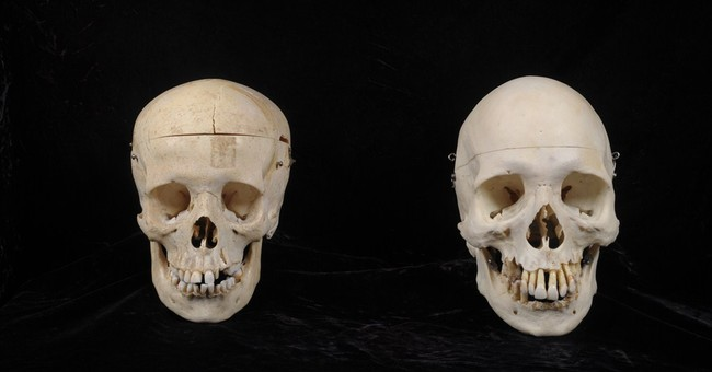 3 skulls donated to Seattle-area thrift store