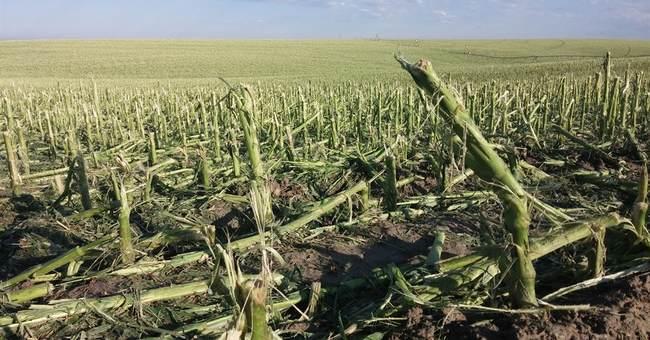 Big hail shatters windows, flattens Nebraska crops