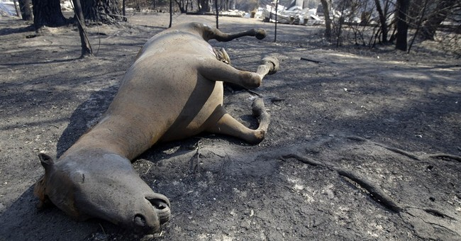 Record settlement reached in Aussie wildfire suit