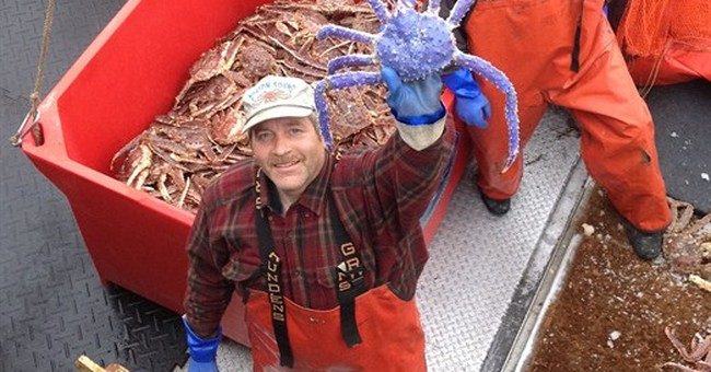 Rare blue-colored red king crab caught in Alaska