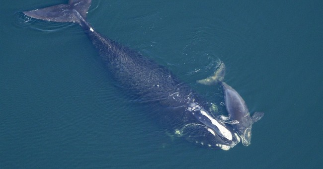 Feds approve oil exploration off US Eastern Coast