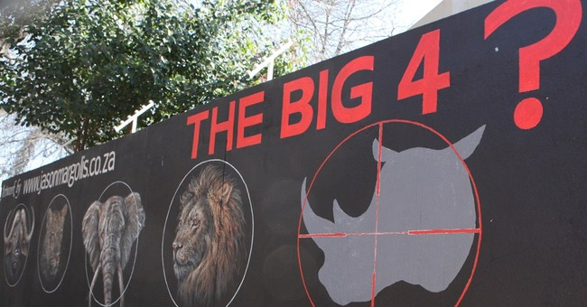 South Africa: Rhino poacher gets 77 years in jail