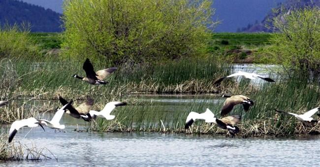 Northwest wildlife refuges to phase out pesticide