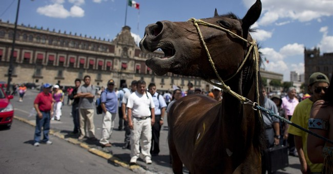 Mexico's circuses caught up in animal rights spat