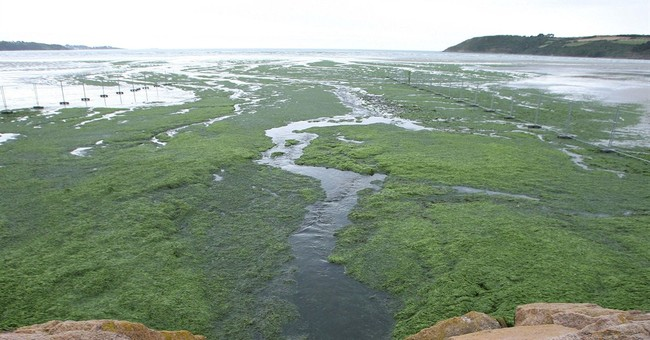 Court rules France responsible in toxic algae case
