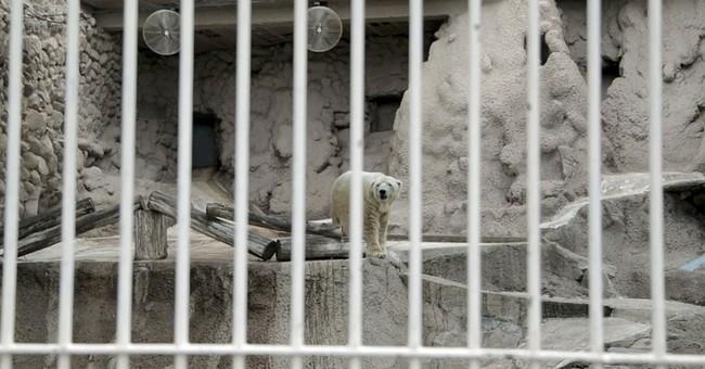 Argentina zoo freezes polar bear move to Canada