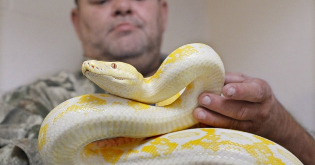 US wildlife officials propose limiting snake trade