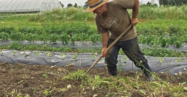 Incubator farms nurture agriculture entrepreneurs